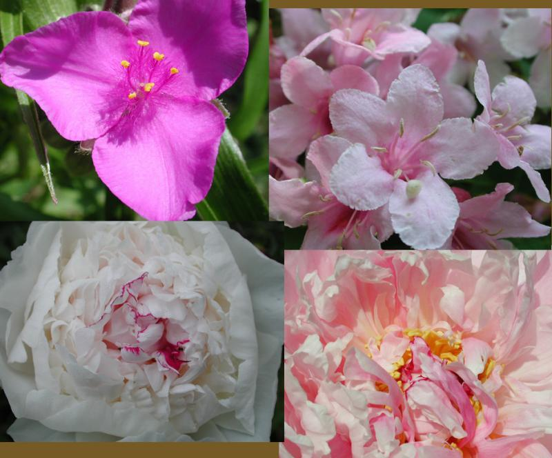 Myflowercollage copy.jpg
