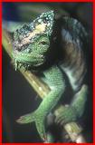 Reptile.