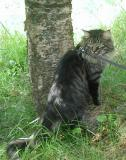 Hugo posing under the birch tree!