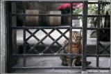 cat IT136AB.jpg