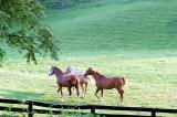 Horses in Side Pasture