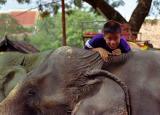 Boy climbing onto an elephant, Ayutthaya, Thailand