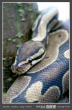 02 snake.jpg