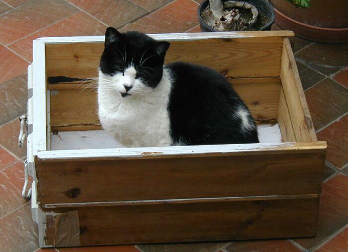 Blackie in old drawers