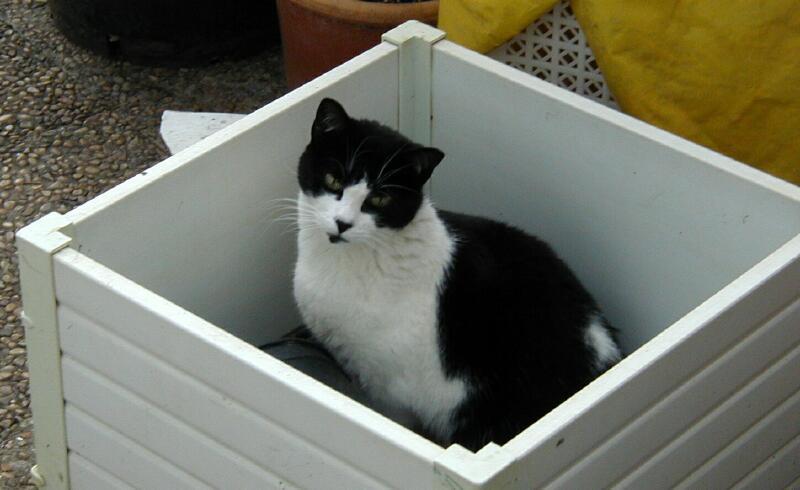 Blackie in Flower Box