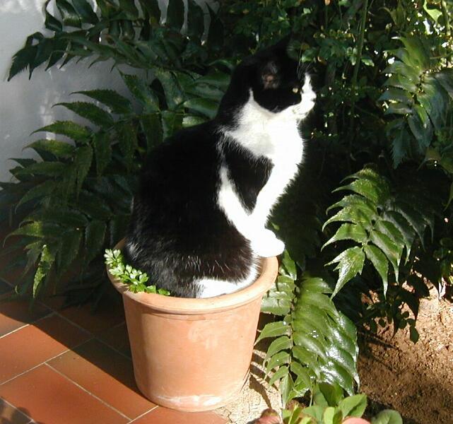 Blackie on Flower Pot