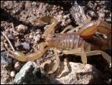 Scorpion #2