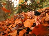P1012320 falling leaves.JPG