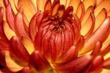 IMG_0911 flower.jpg
