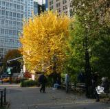 Fall - City Hall Park