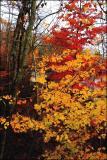 buZZed Foliage