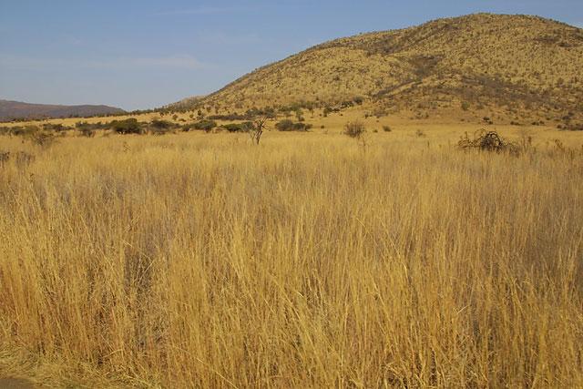 The grass in Pilanesbergy