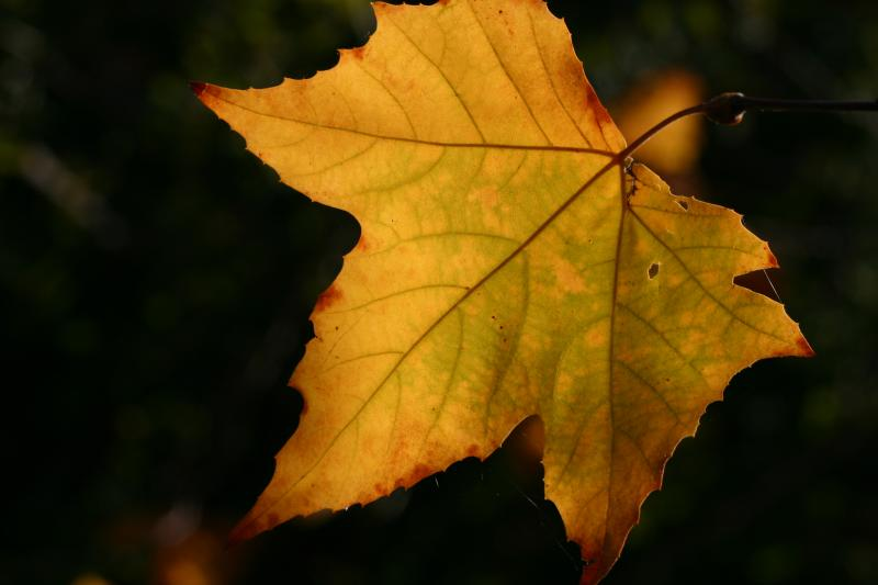 Gratitous Leaf Shot