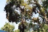 Arbol, Parque Nacional Iguazú