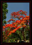 Vivid-Tree.jpg