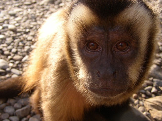 My Monkey.jpg