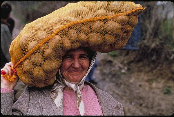 25 kilos of potatoes