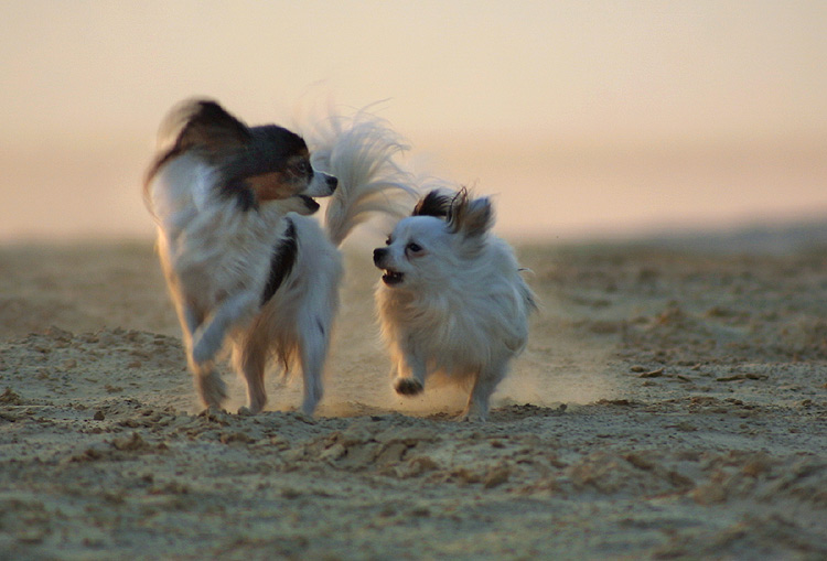 Best friends.....
