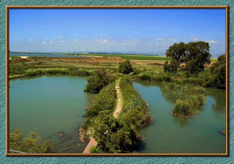 The marshland of Naaman