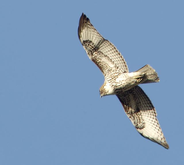 Under Hawk.jpg