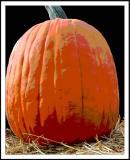 DSC_0016a Pumpkin.jpg