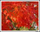 10/16/04 - Obligatory Fall Leaves