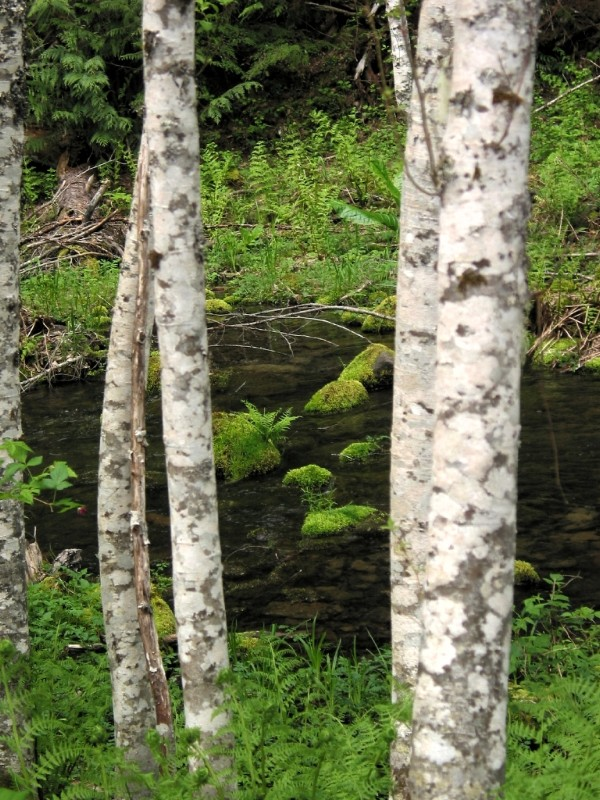 Trees and Creek