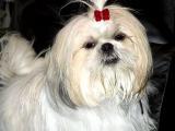 Tzu-Li all of two years old.jpg