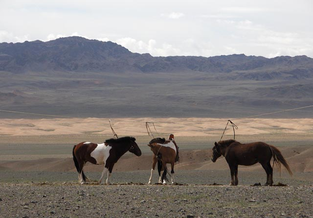 tetherd horses.