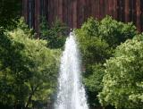 Fountain & Japanese Pagoda Trees