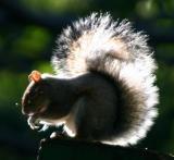 Squirrel with an Aura