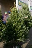 Farmers Market Christmas Trees