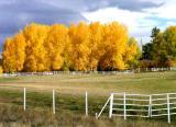 Autumn Colors '04