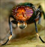 Flies (Unusual)