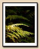 520 fern pattern copy.jpg