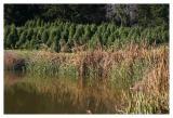 Shafer Christmas Tree Hunting 2004
