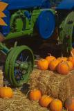 It's the pumpkin time