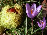 Wild Flowers, Insects & Nature Close-ups