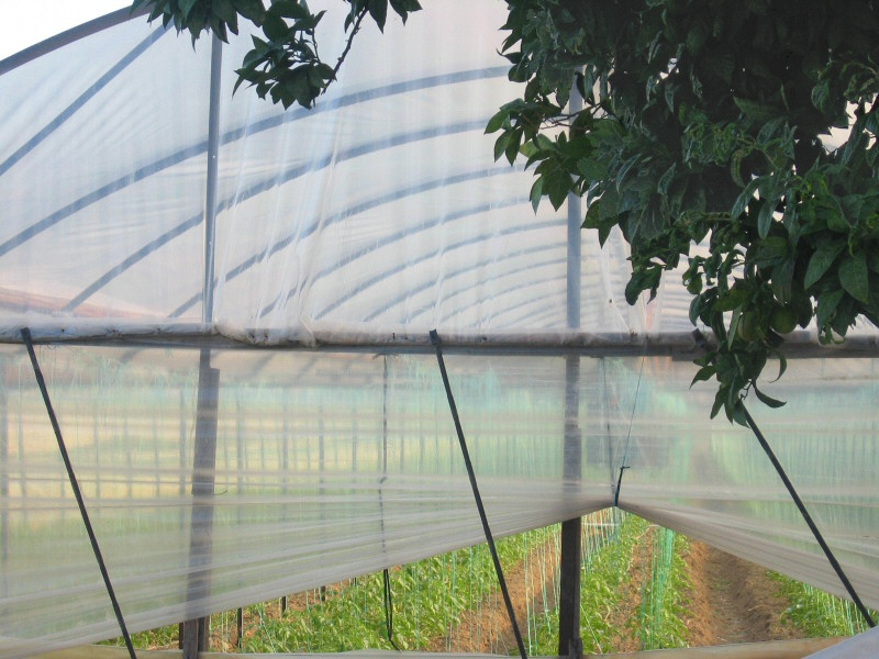 Myra area is filled with greenhouses growing tomatos, eggplant and other vegetables.
