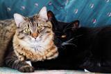 Benjy & Max on green loveseat 1