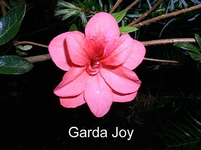 Garda Joy
