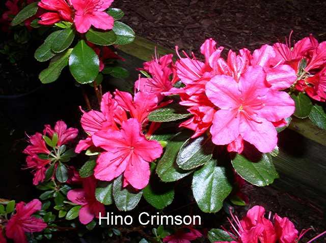 Hino Crimson