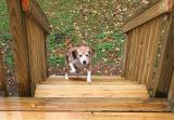 Lucy & new stairs