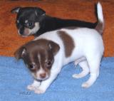 4 Week old Sparki with his sister Sari