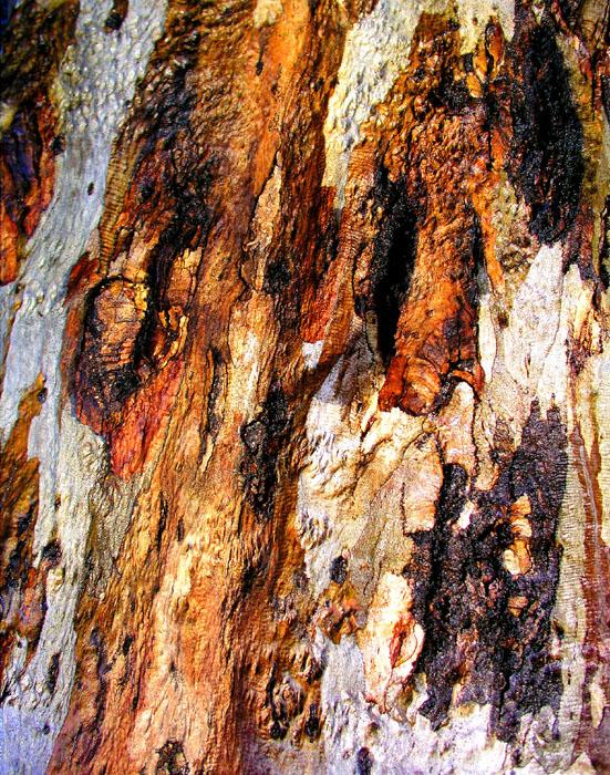 Tree Bark In Rain