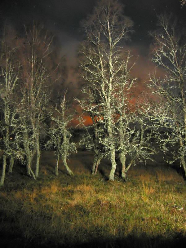 Trees at Night_filtered