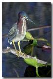Everglades 7334b.jpg