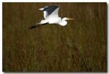 Everglades7343.jpg