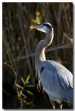 Everglades 7347b.jpg