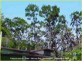 chauve-souris - bats